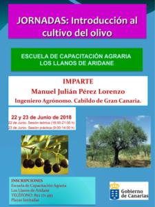 Introducción al cultivo del olivo